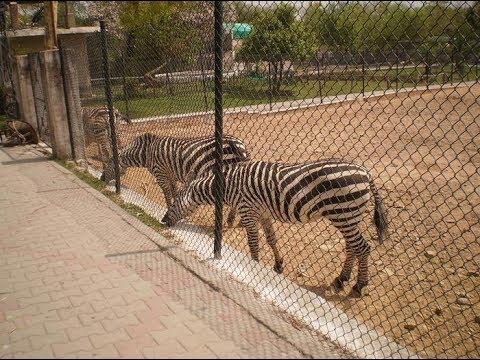 Islamabad-Zoo