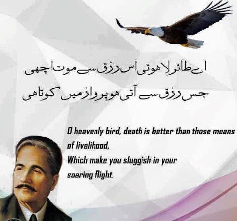 shahin-in-iqbal-poem