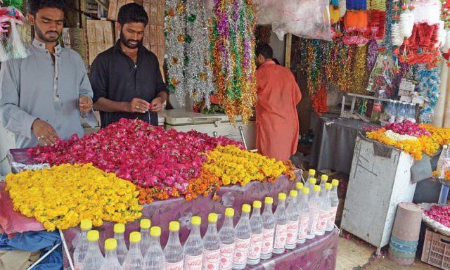 کشت گل رز در پاکستان 4