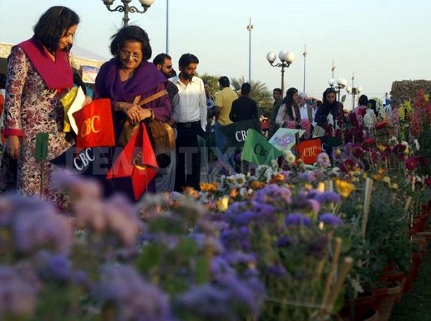 کشت گل رز در پاکستان 1