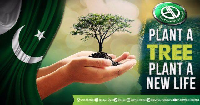 plant trees in pakistan
