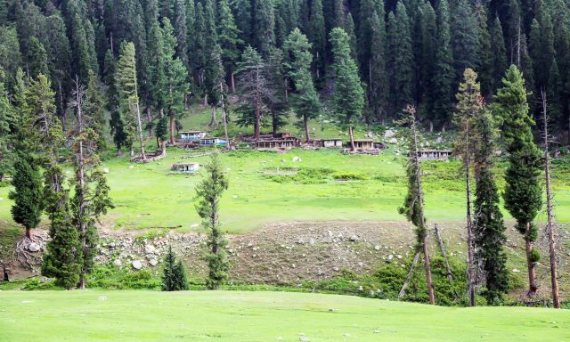 A-lush-green-view-of-a-hamlet-in-Janshai-meadows..