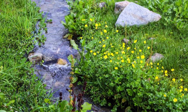 An-enchanting-view-in-Janshai-meadows-in-Anakar-valley