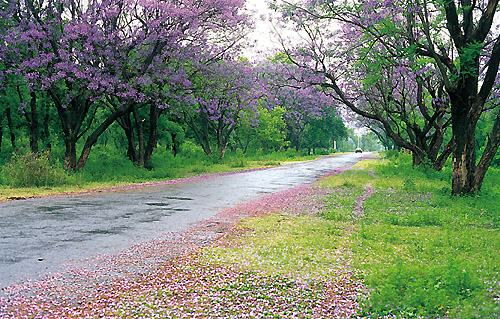 Spring Promise, Islamabad