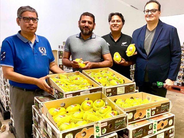 Pakistan revives mango diplomacy begins export to Japan