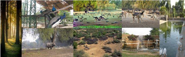 Zoology Field Report Lal Suhanra National Park Bahawalpur Pakistan