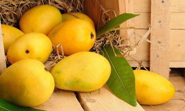 Pakistan surpasses mango export target by 45,000 tonnes despite Covid-19