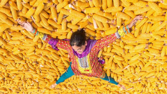 akistan-lying-in-corn-outside-of-lahore.