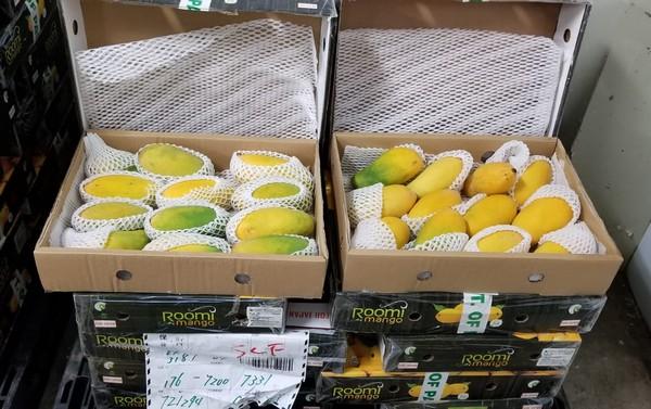 Pakistani mango exports