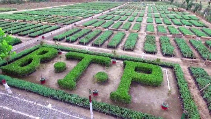 UK Govt Praises Pakistan For 10 Billion Tree Afforestation Project