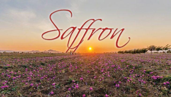 Khorasan's Saffron