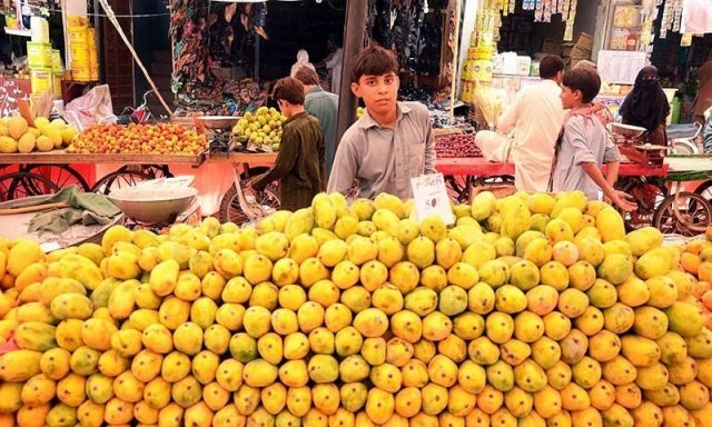 Export of mangoes
