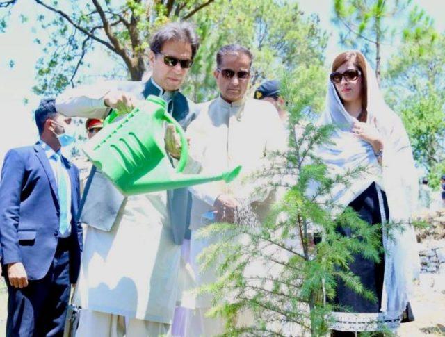 PM Imran plants the first billionth tree under Pakistan's 10 Billion Tree Tsunami project